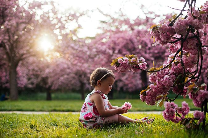 photographe cerisiers japonais paris